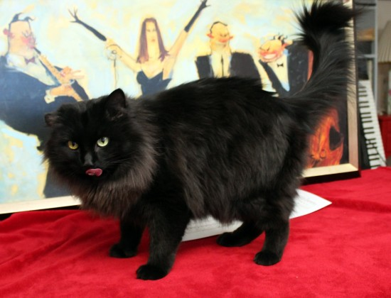 Magic is a kitty with FIV and is one of the sweetest cats around. He loves to be brushed and loves to play.