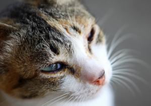 cats-specialneeds-a