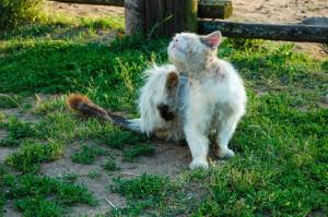 Cat-SkinIssues