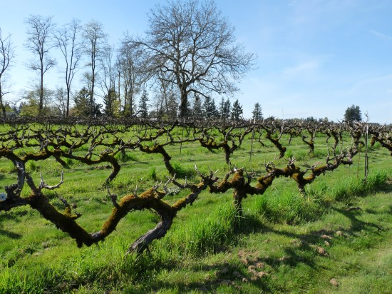 Clark County is currently home to 18 wineries and tasting rooms. Enjoy a taste of local in Southwest Washington Wine Country this Memorial Weekend. Dan Eierdam