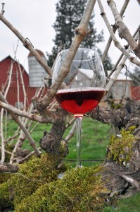 English Estate Winery is home to 36-year-old pinot noir vines that make truly terroir-driven wines. English Estate Winery