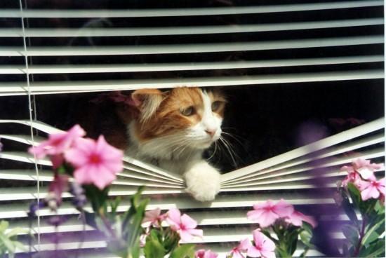 Ember-window-1024x687.jpg