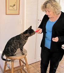 CAT-TRAINING-LADY.jpeg